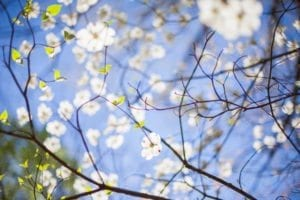 Blogowe podsumowanie kwietnia